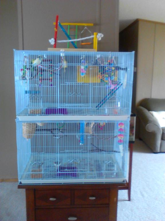 Cage Setup Idea for 2 budgies-bird-cage-setup-021.jpg