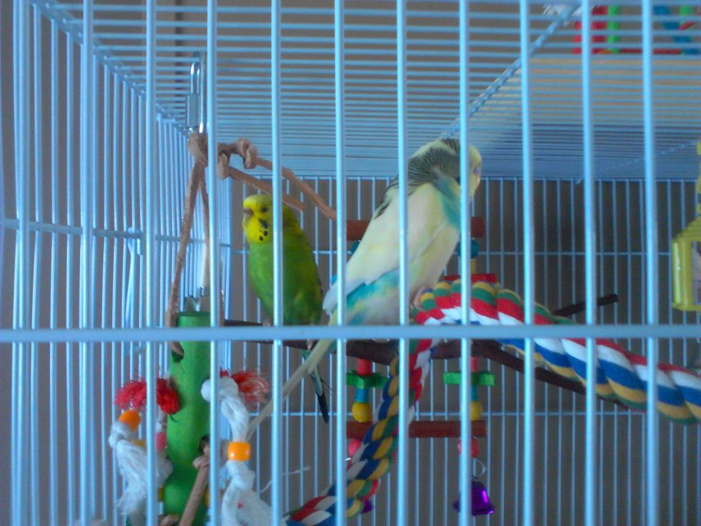 Pics of Finches-bird-cage-setup-029.jpg