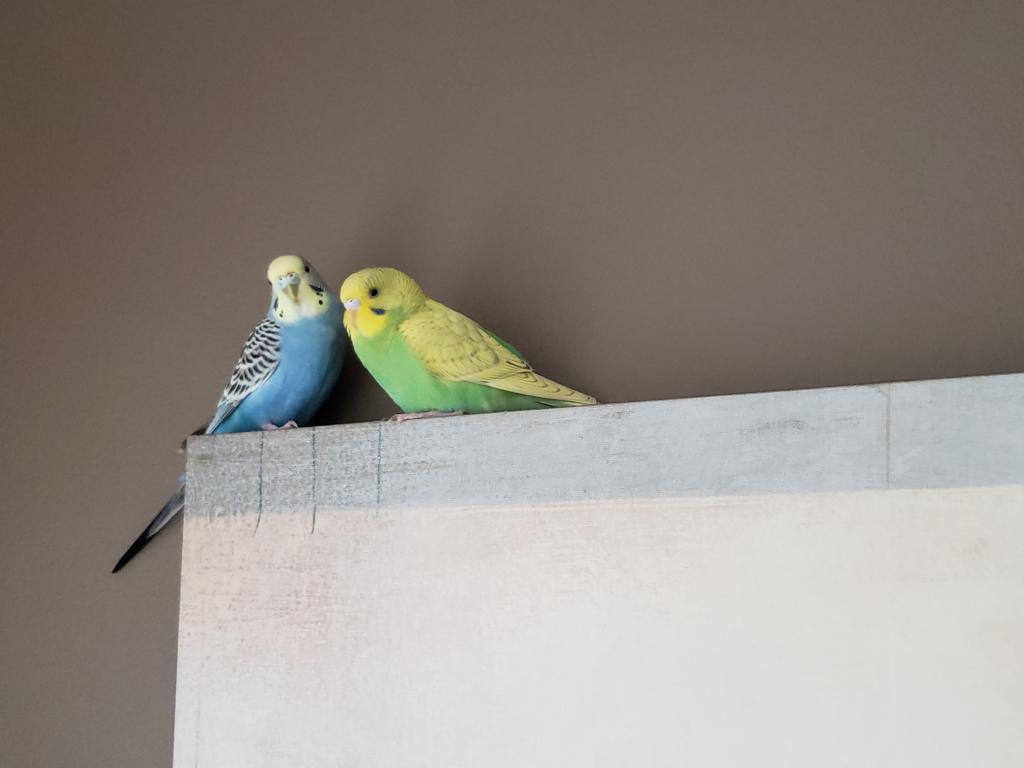 Meet Azeezu!!-birdie-azeezu-2.jpg
