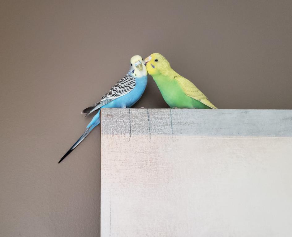 Meet Azeezu!!-birdie-azeezu.jpg
