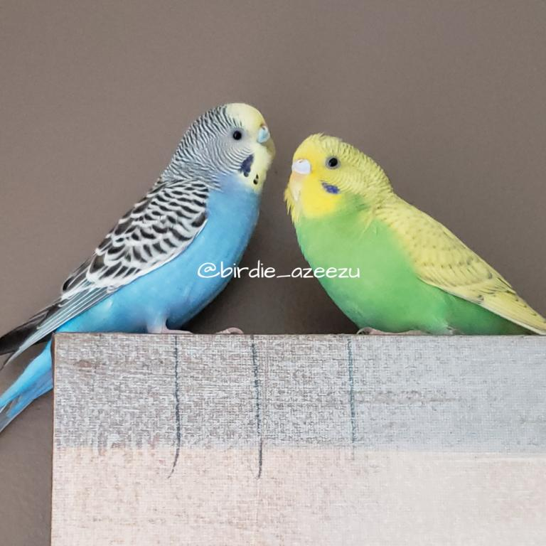 Birdie & Azeezu-birdie-azeezu.jpg