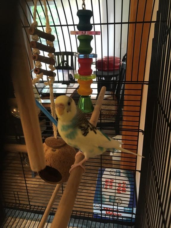 Please help with Birdie's gender ?-birdie.jpg