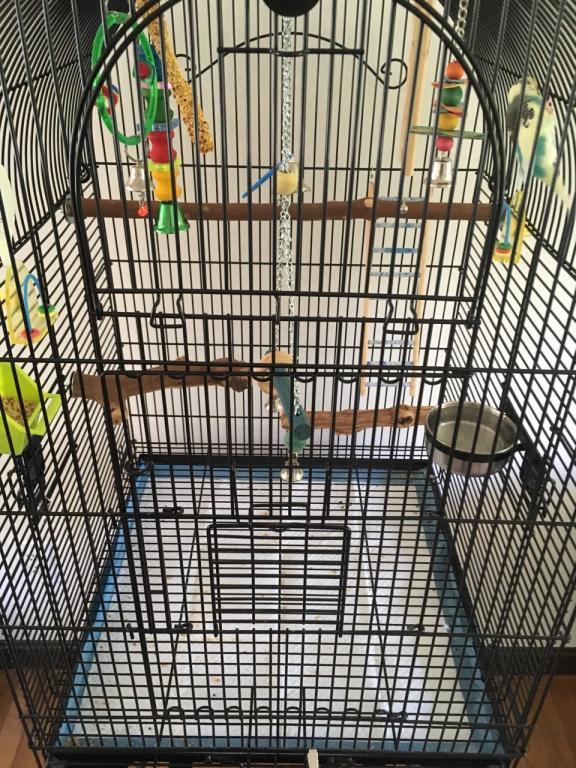 Please help with Birdie's gender ?-birdie-perch-2.jpg