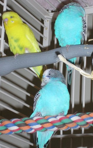 RIP Maggio, Sunshine, and Miracle-birds-026.jpg