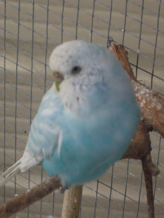 Help with mutation please...-birds-birds-birds-002.jpg