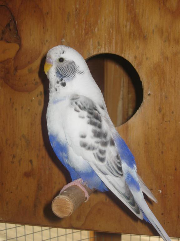 Help with mutation please...-birds-birds-birds-003.jpg