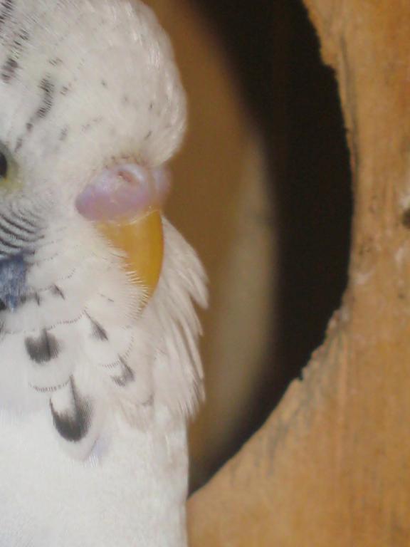 Help with mutation please...-birds-birds-birds-006.jpg