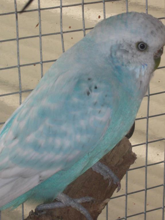 Help with mutation please...-birds-birds-birds-008.jpg