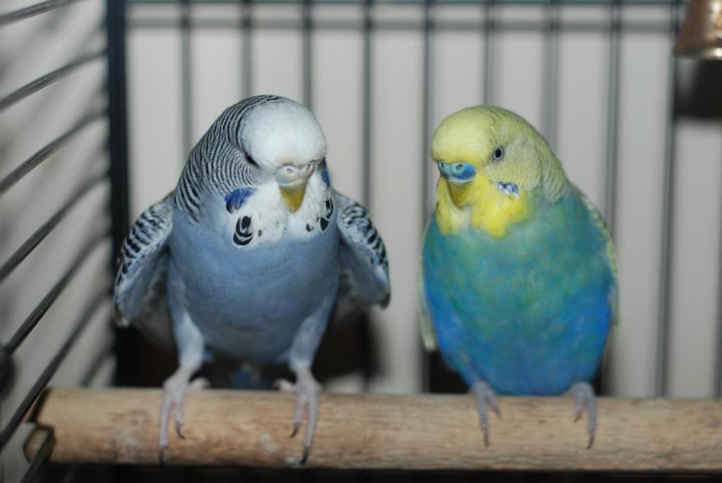 What pairs for what babies?-birds.jpg