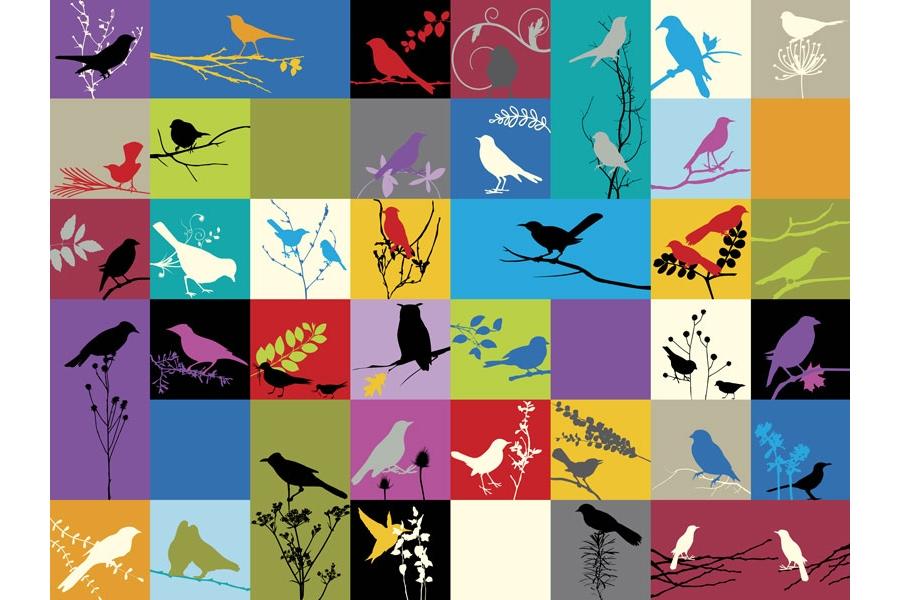New bird room-birds2.jpg