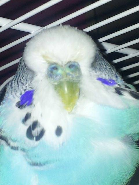 What are the new guys?-blue-cere.jpg