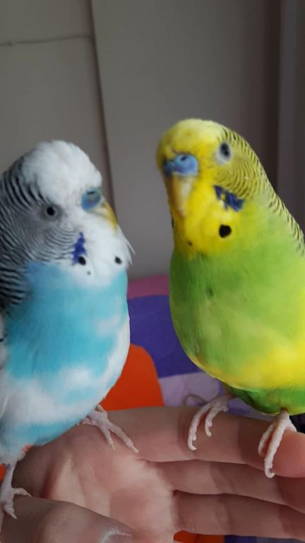 Checking Cere's color-both.jpg