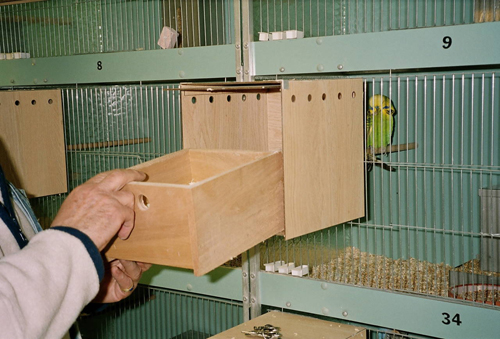 Looking for breeding boxes-breeding-nest-box.jpg