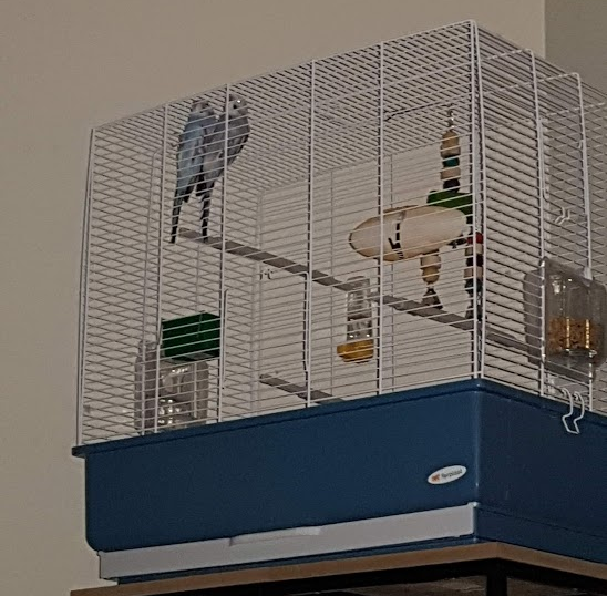 Questions about taming my Budgies-cagehiking.png