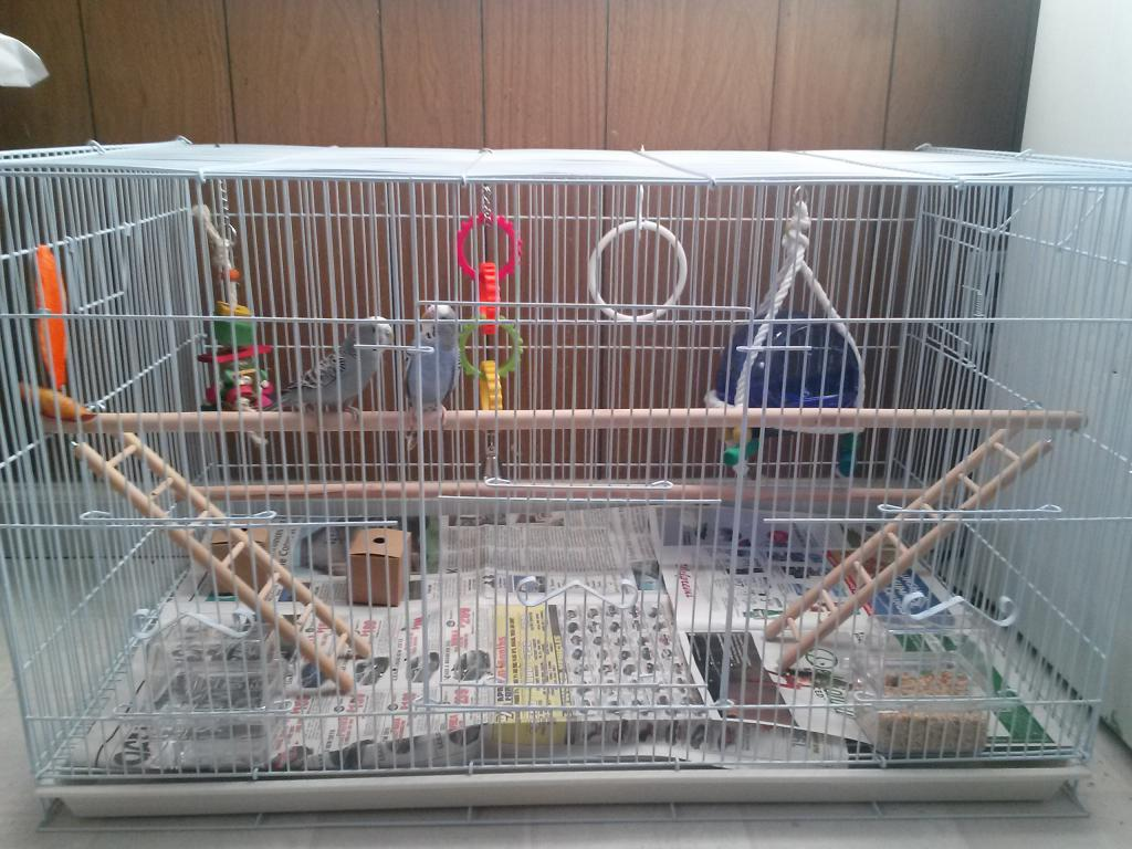 New to Budgies-cam00357.jpg