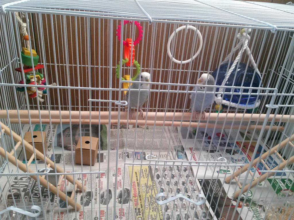 New to Budgies-cam00358.jpg