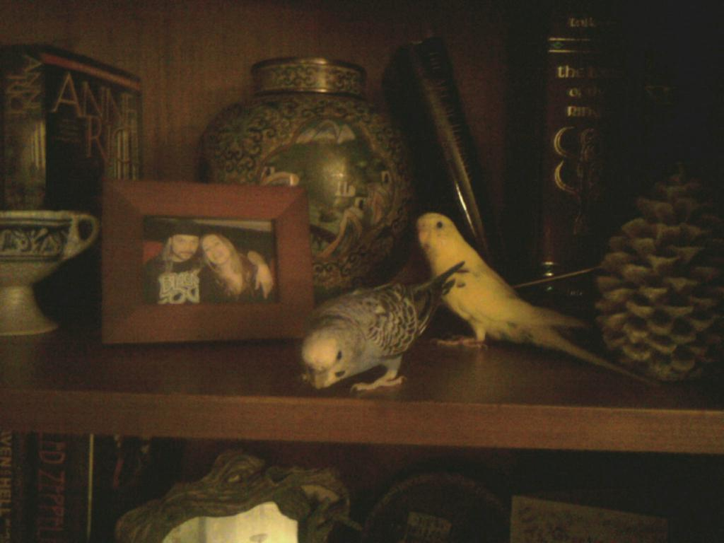 my new shelf decorations-chirpies-shelf.jpg