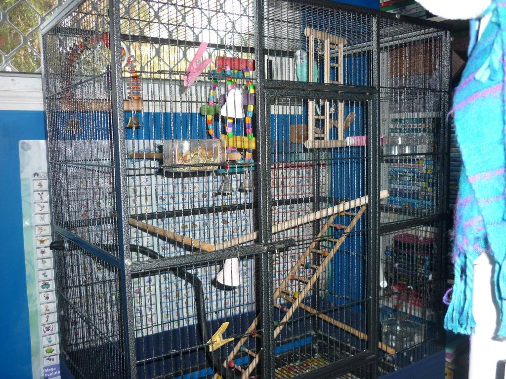 Restructuring cage for now single budgie, want advice-chitters-cage-1.jpg
