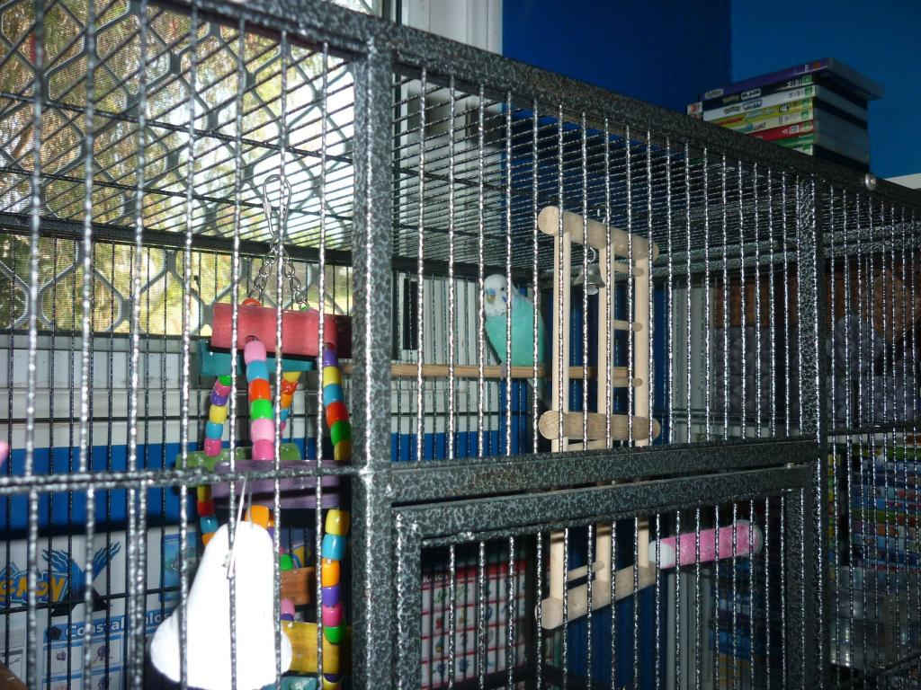 Restructuring cage for now single budgie, want advice-chitters-cage-2.jpg