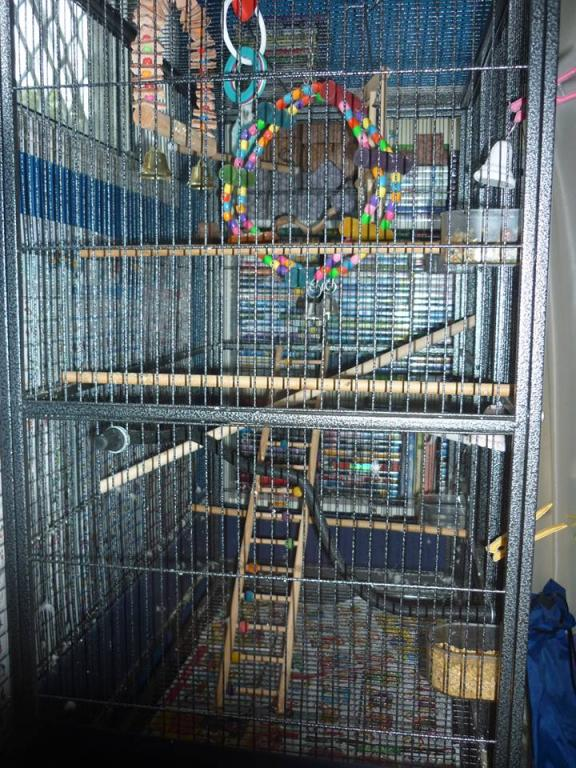 Restructuring cage for now single budgie, want advice-chitters-cage-3.jpg