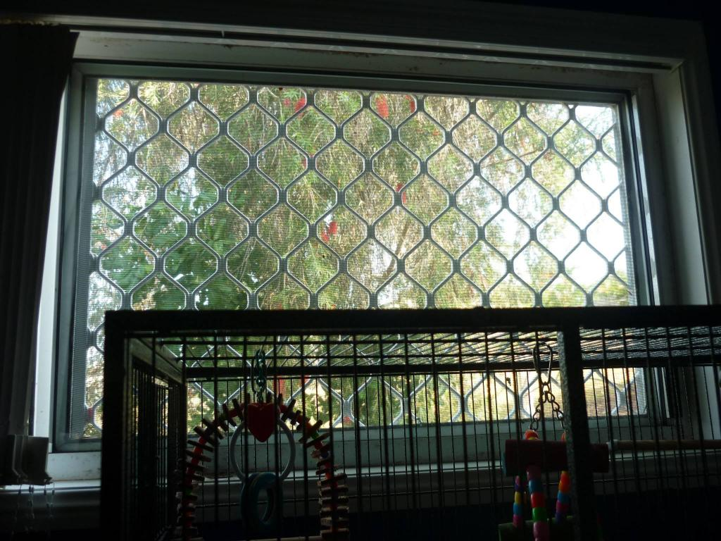 Restructuring cage for now single budgie, want advice-chitters-cage-4.jpg