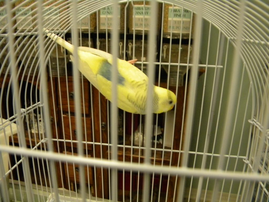 Please help me identify-clear-wing-keet-001.jpg