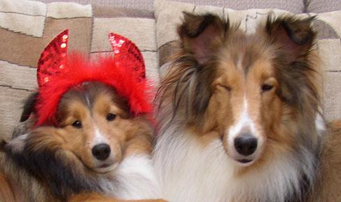 Introducting Kylie and Autumn-devil-dog.jpg