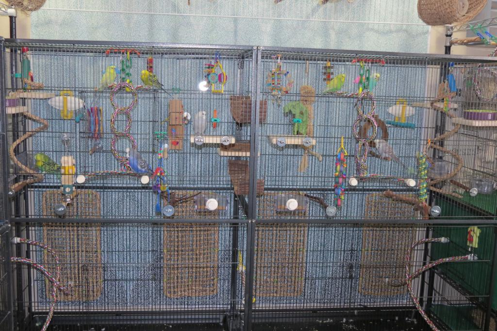 Double F050 2 year update-double-f050-budgies.jpg