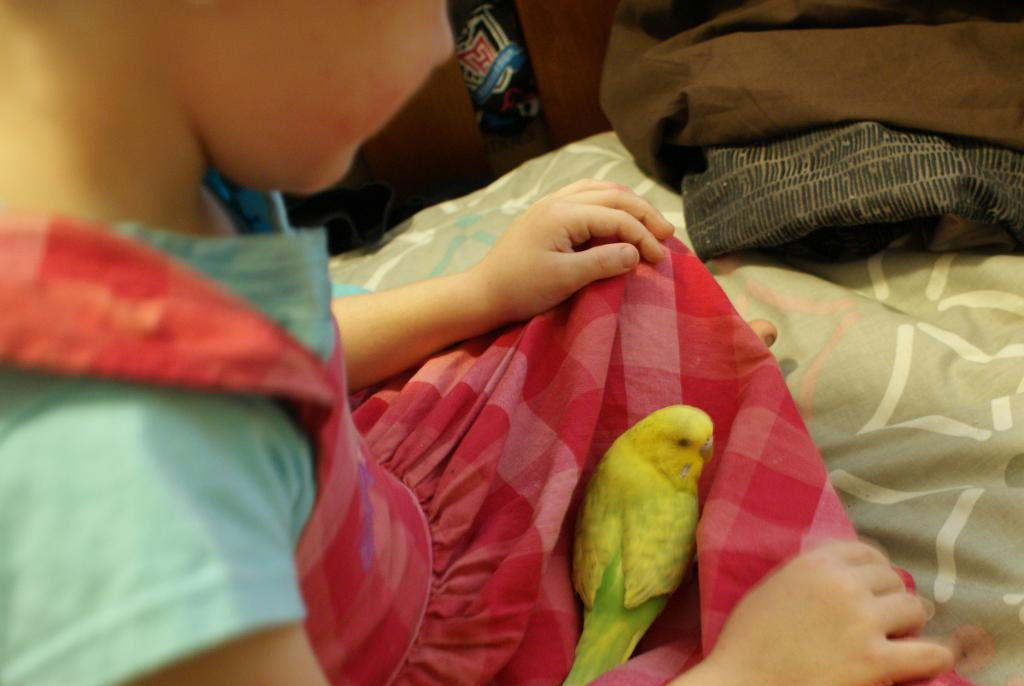 hello from a new member and her budgie-dsc06315.jpg