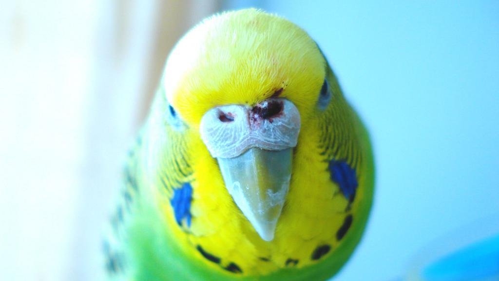 My poor bird has blood on her nose :(-dsc07750f.jpg