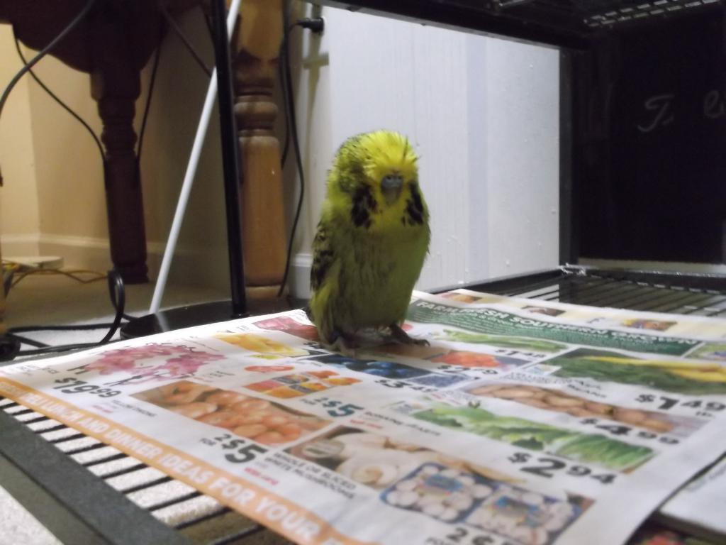 Funny creature-dscf2425.jpg