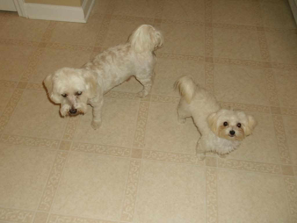 My dogs-dscf2632.jpg