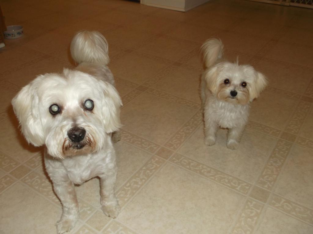 My dogs-dscf2633.jpg