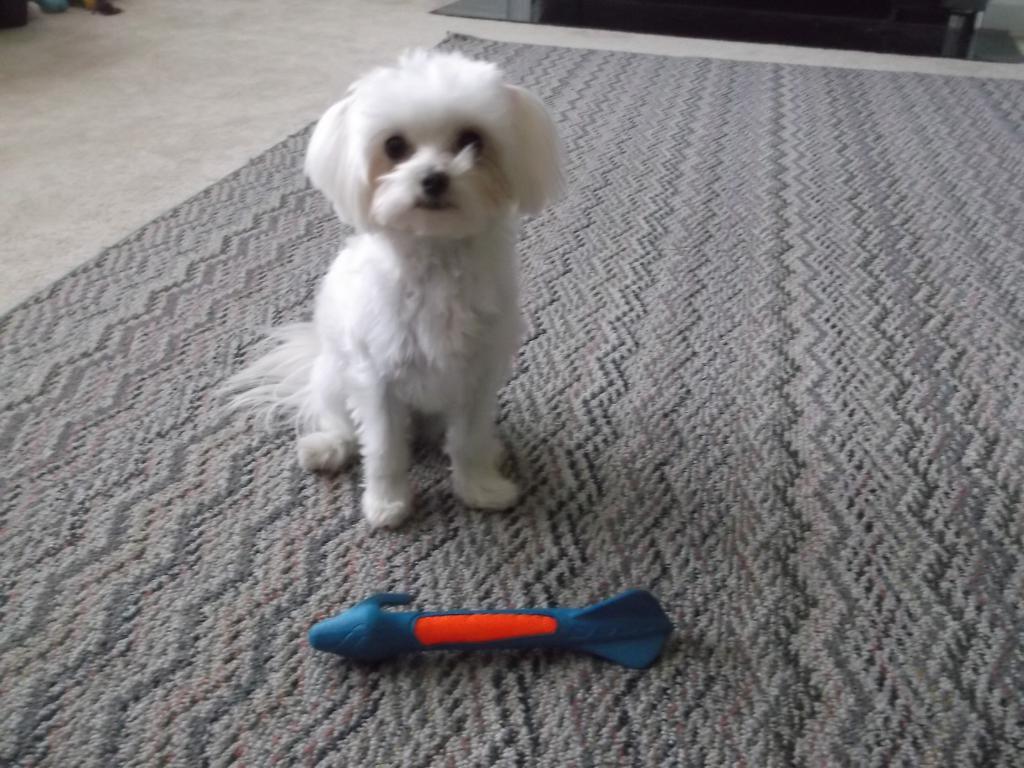 Gizmo is 1 year old-dscf2752.jpg