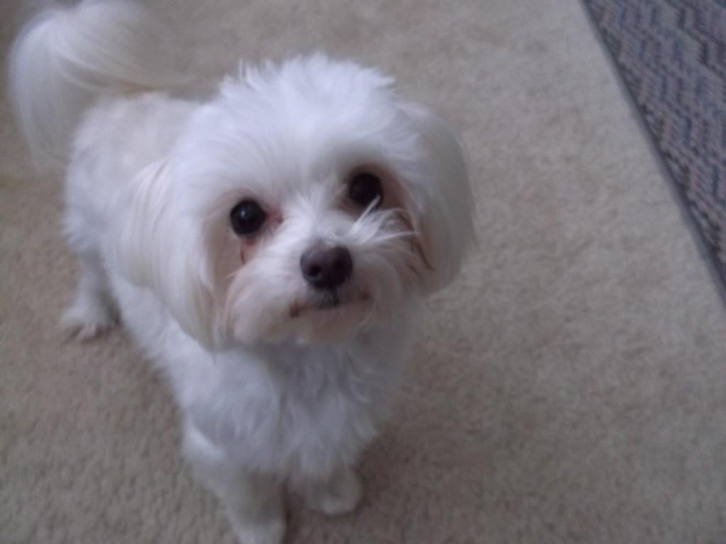 Gizmo is 1 year old-dscf2754.jpg