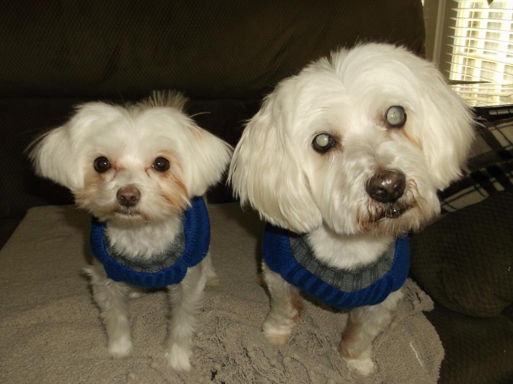 My boys in their new sweaters-dscf2769.jpg