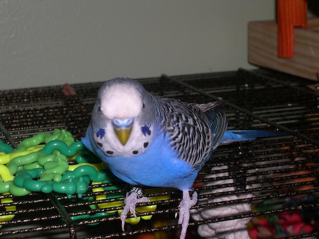 My Budgie passed away last night-dscn0046.jpg