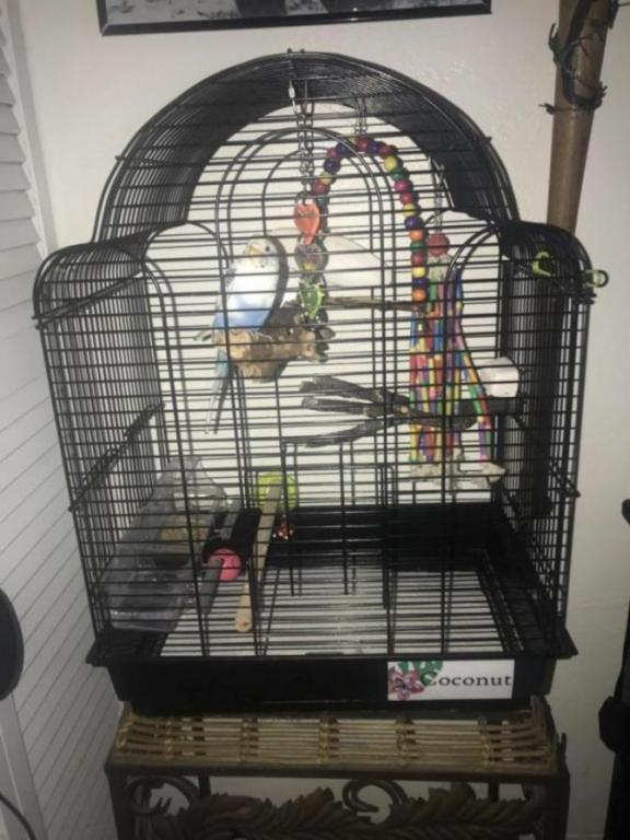 Best cage for a single budgie?-e76a2414-5b53-42c3-9a4b-359bfc4c6788_1565398928005.jpg