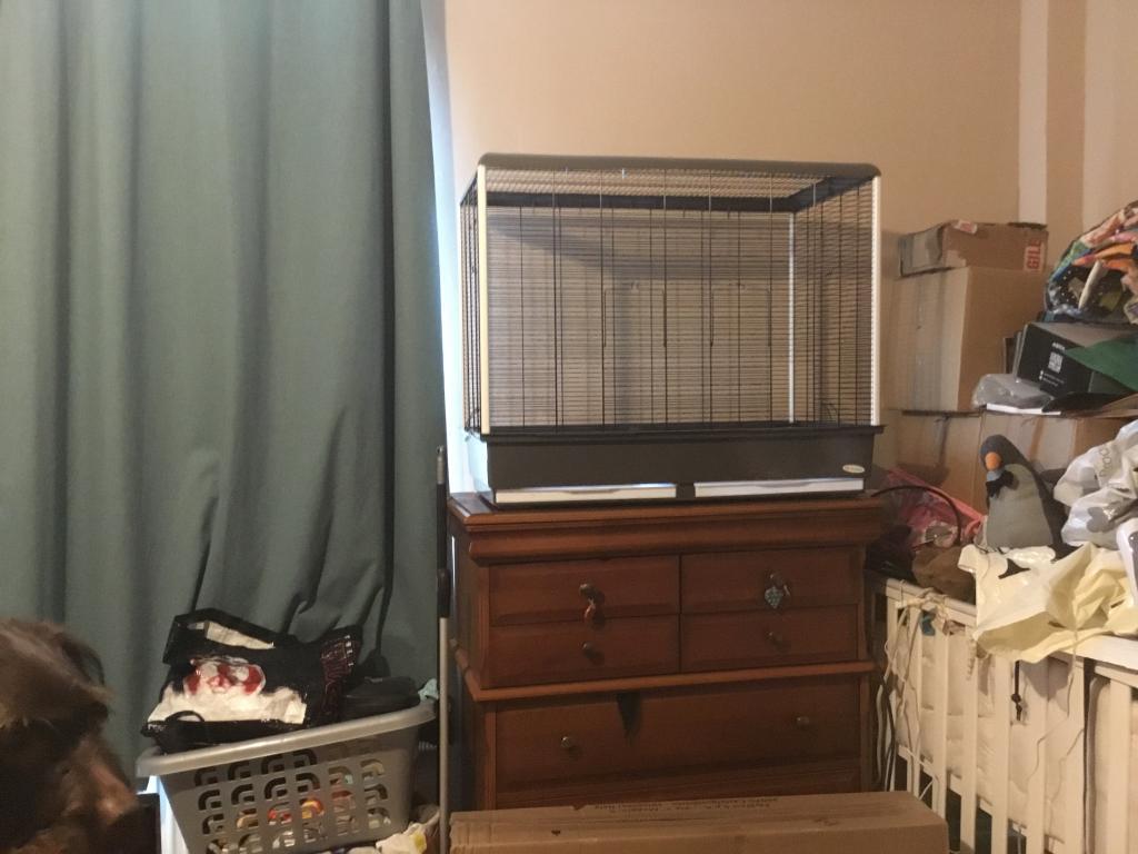 Return of the Budgie (cage help!)-fbd8444c-1acd-46b6-97ef-1e70ecd75020.jpg