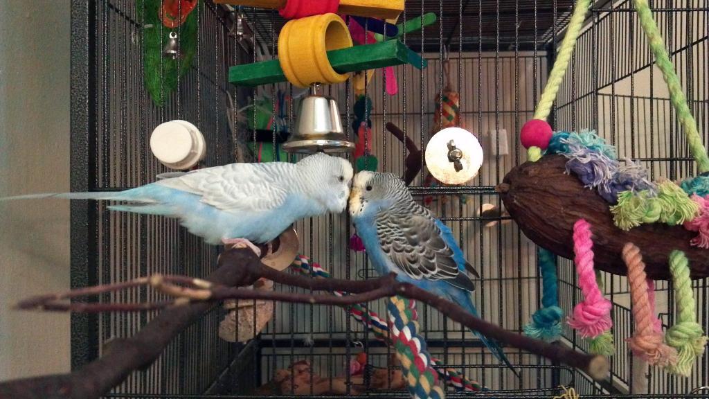 Alice and Horatio Update!-flirty-bird-3.jpg