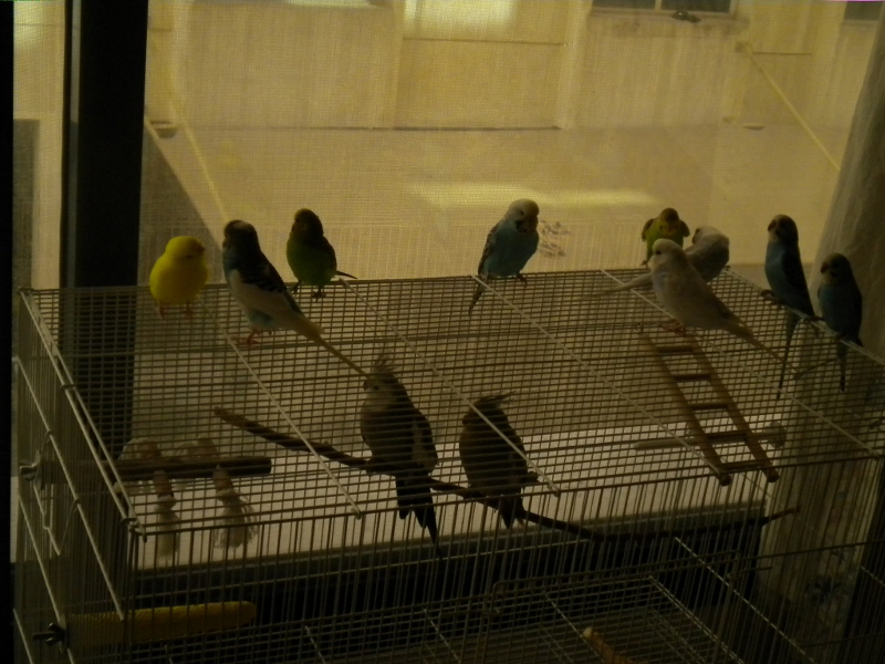my flock ....with some extras :P-flock.jpg