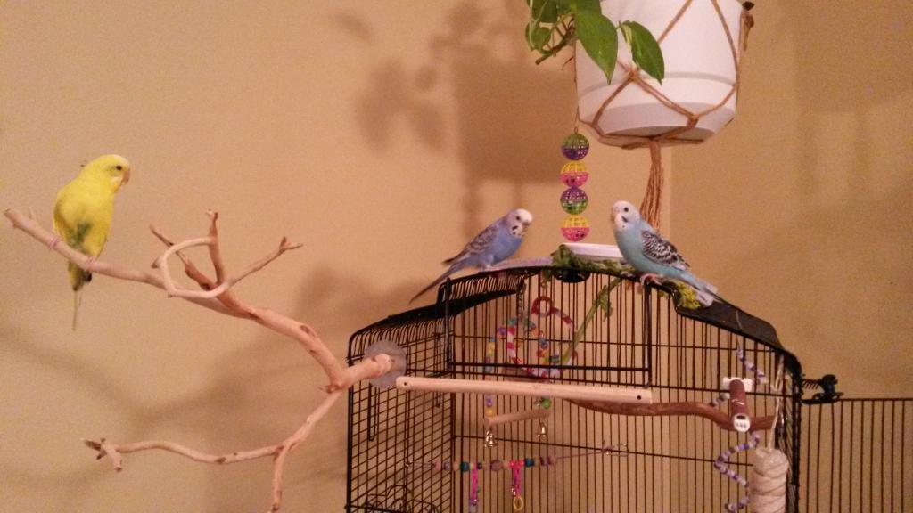 My little flock-flock2.jpg