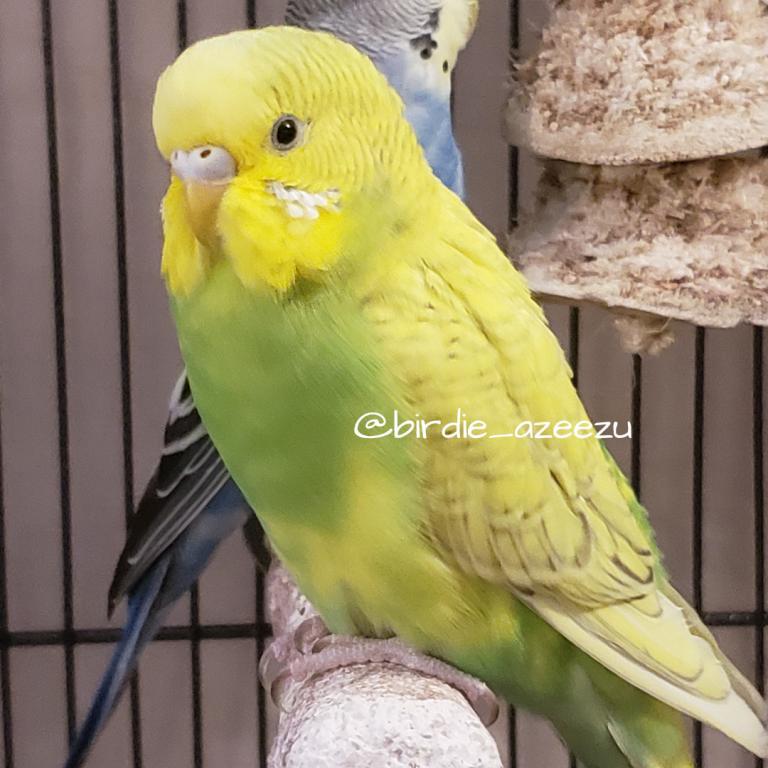Birdie & Azeezu-fluffy-zz.jpg