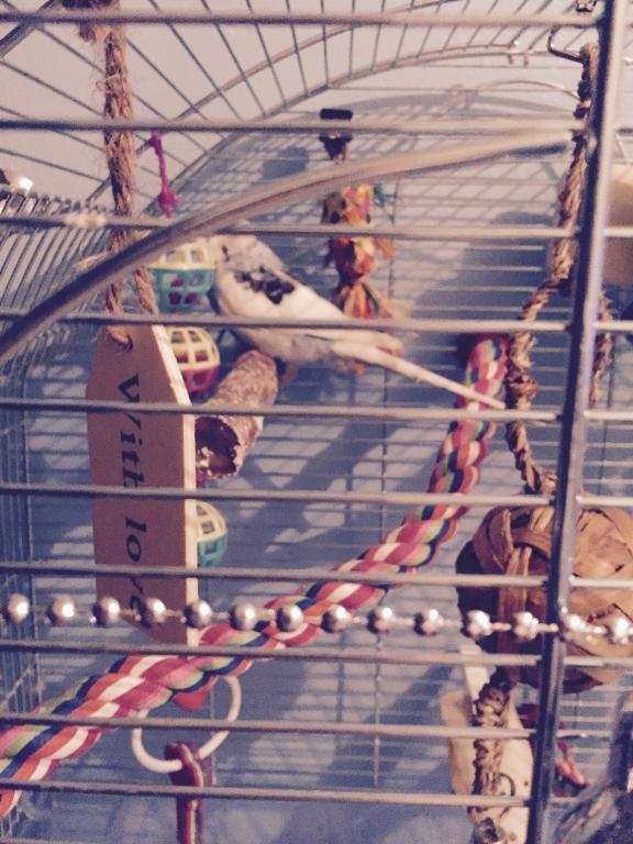 Birdmas Cages!-fullsizerender-1-.jpg