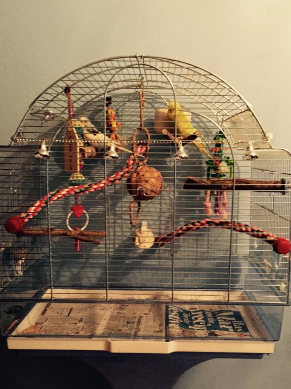 Birdmas Cages!-fullsizerender.jpg