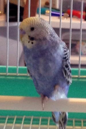 Pic of my new baby Goober-goober1.jpg