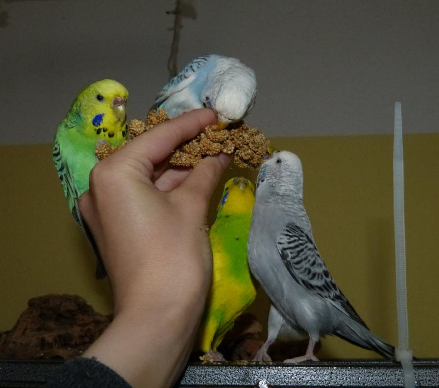 """More """"millet party""""-photos-group-pic.jpg"""