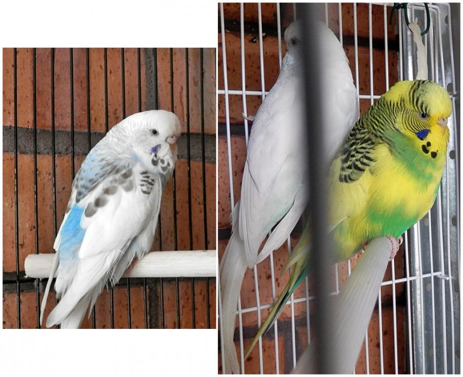 My new boys & girls-h6-h5-h4.jpg