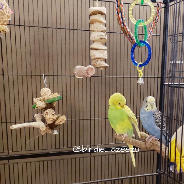 Birdie & Azeezu-hanging-out.jpg