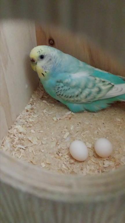 Eggs :)-hannaheggs15.jpg